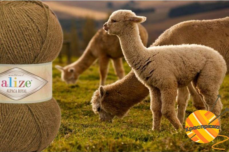Alpaca Royal, Краспряжа